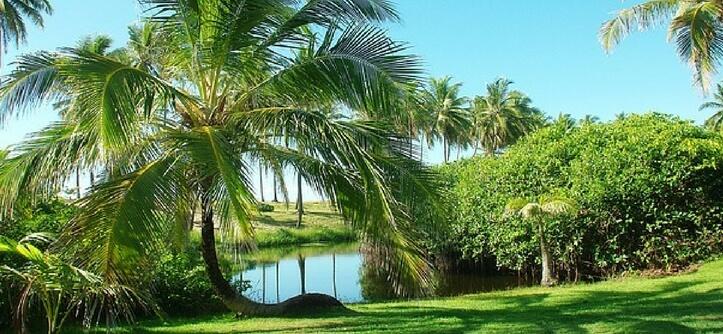 Você Sabe onde fica Costa do Sauípe e o que fazer por lá?